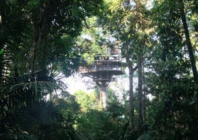 Boomhut in de Gibbon experience